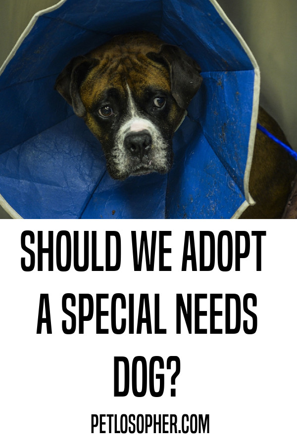 rescue dogs with special needs
