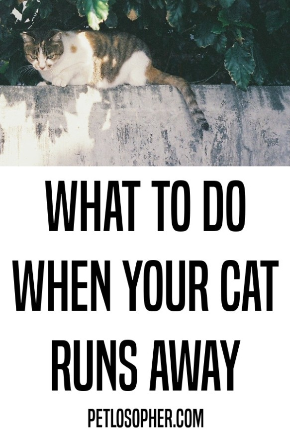 what to do when your cat runs away