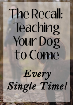 The Recall - Teaching Your Dog to Come Every Single Time