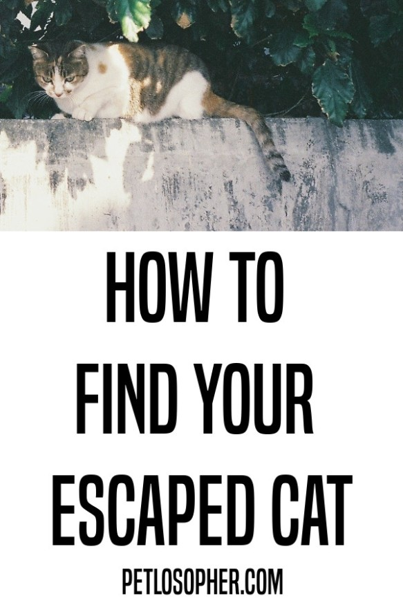 how to find your escaped cat
