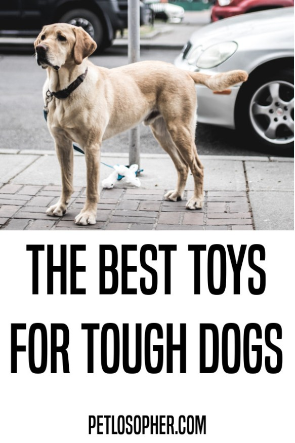 the best toys for tough dogs