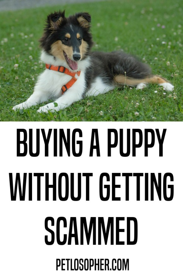 buying a puppy without getting scammed