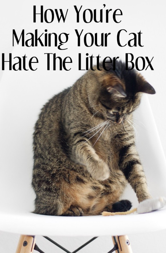 How You're Making Your Cat Hate the Litter Box | litter box | litter box smell | litter box training | litter box training cats | litter box tips