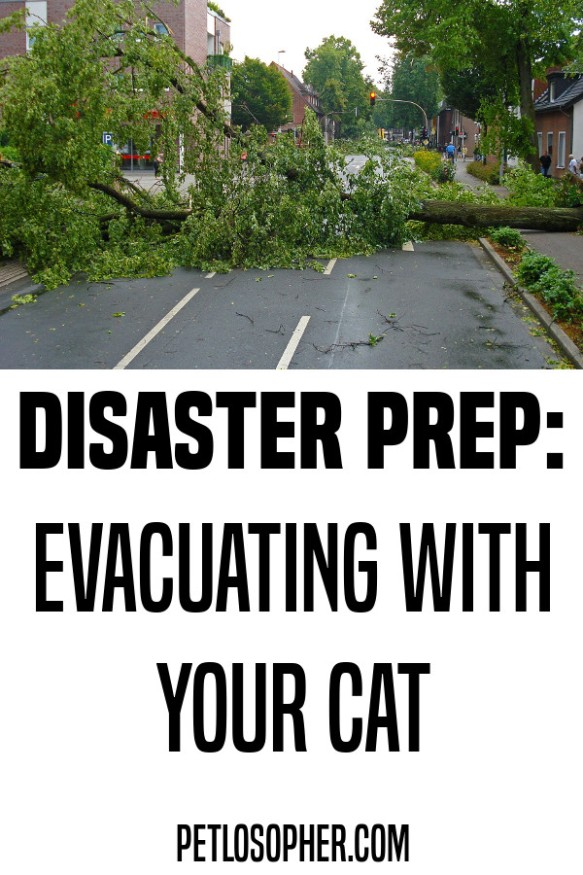 disaster prepping evacuating with your cat