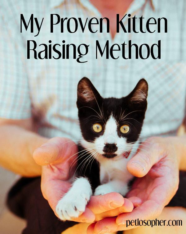 My Proven Kitten Raising Method | Kitten Raising | Kitten Raising Tips | Kitten Training | Kitten Training Tips | Cat Training