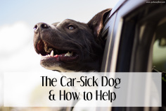 The Car-Sick Dog & How To Help