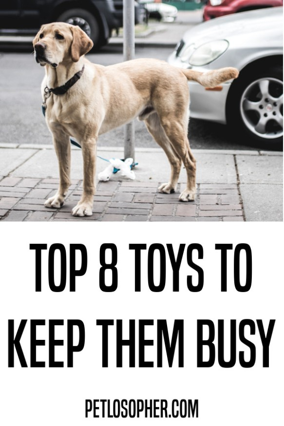 top 8 toys to keep dogs busy
