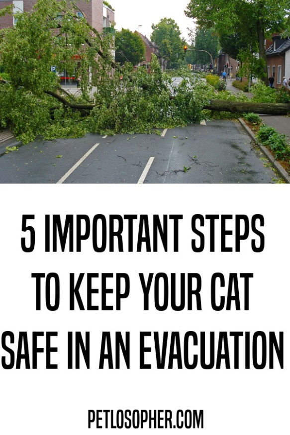 5 important steps to keep your cat safe in an evacuation