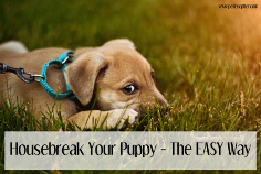7 Tips to Housebreak Your Puppy - The EASY Way