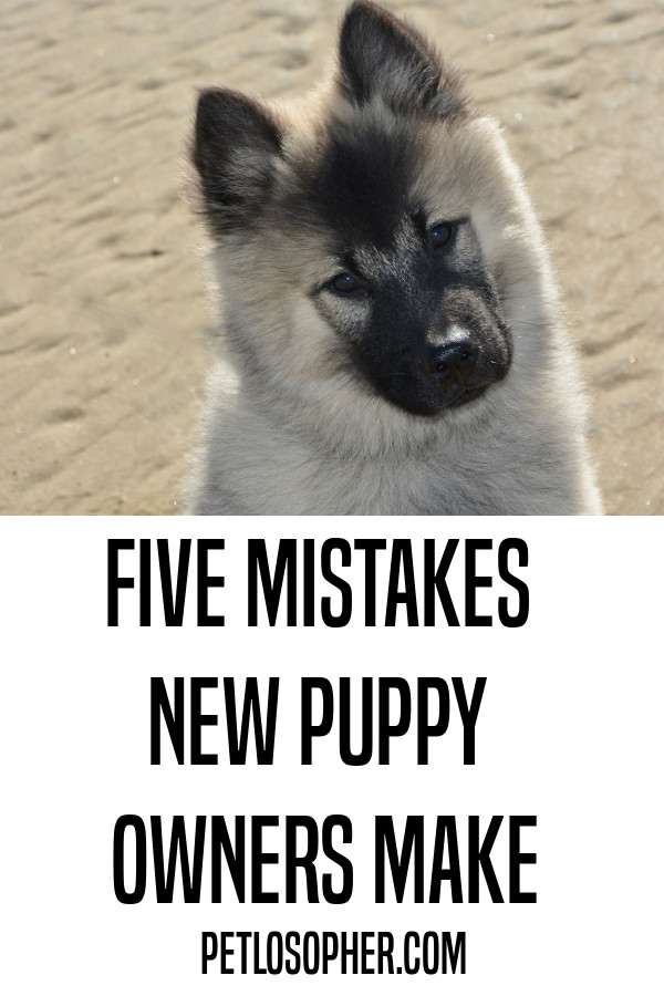 Five mistakes new puppy owners make.