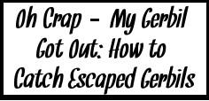 Oh Crap - My Gerbil Got Out: How to Catch an Escaped Gerbil