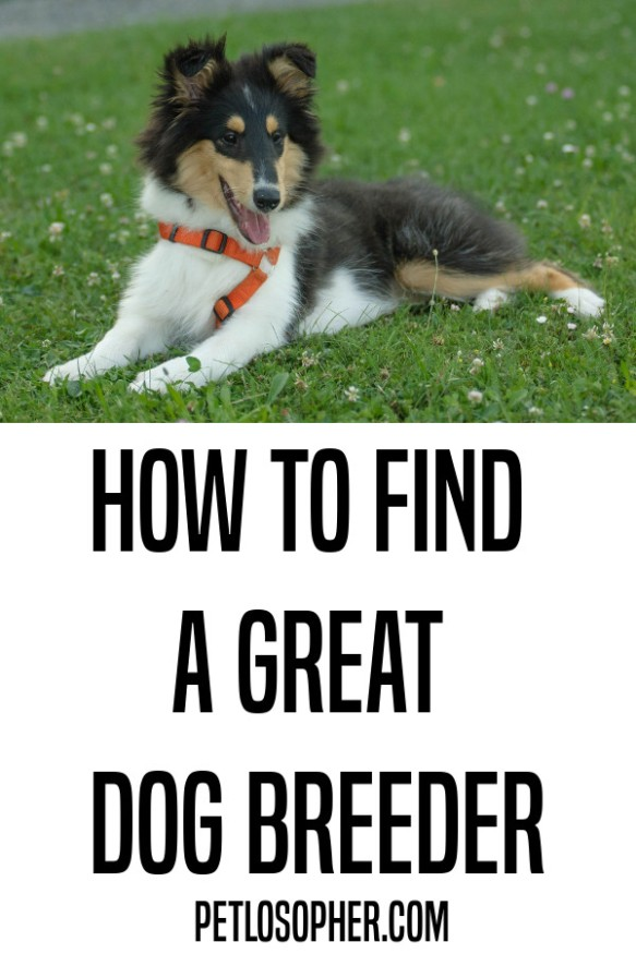 how to find a great dog breeder