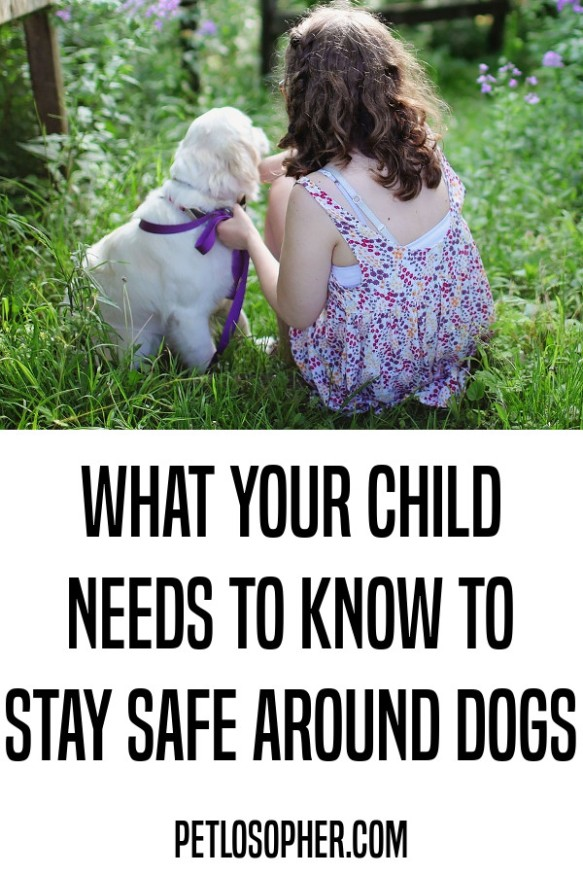 what your child needs to know to stay safe around dogs