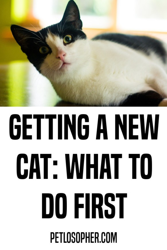 Getting a New Cat: What to Do First