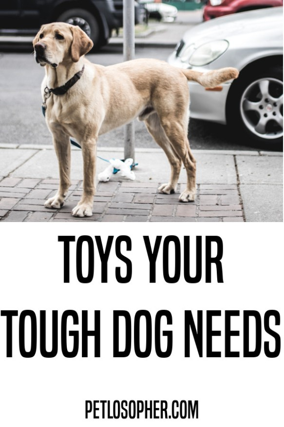 toys your tough dog needs