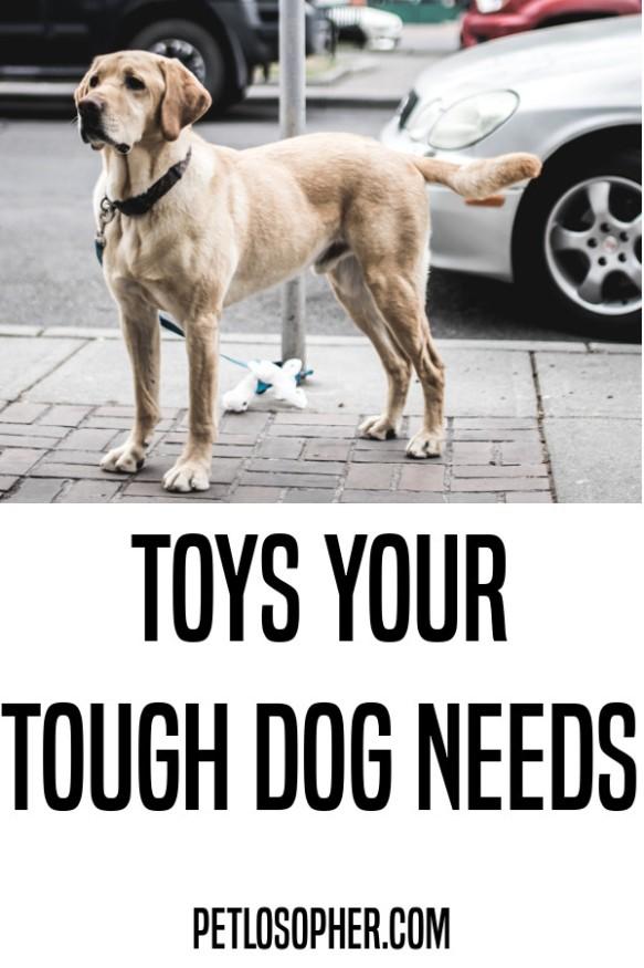toys your tough dog needs