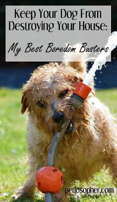 The Destructive Dog Combating Boredom