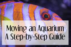 Moving an Aquarium:  A Step-by-Step Guide