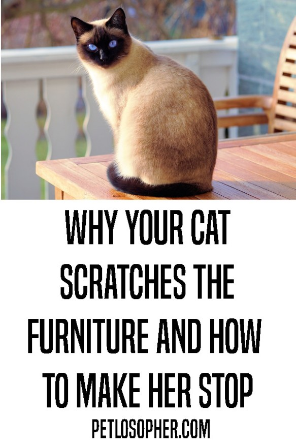4 reasons your cat scratches the furniture and how to make her stop