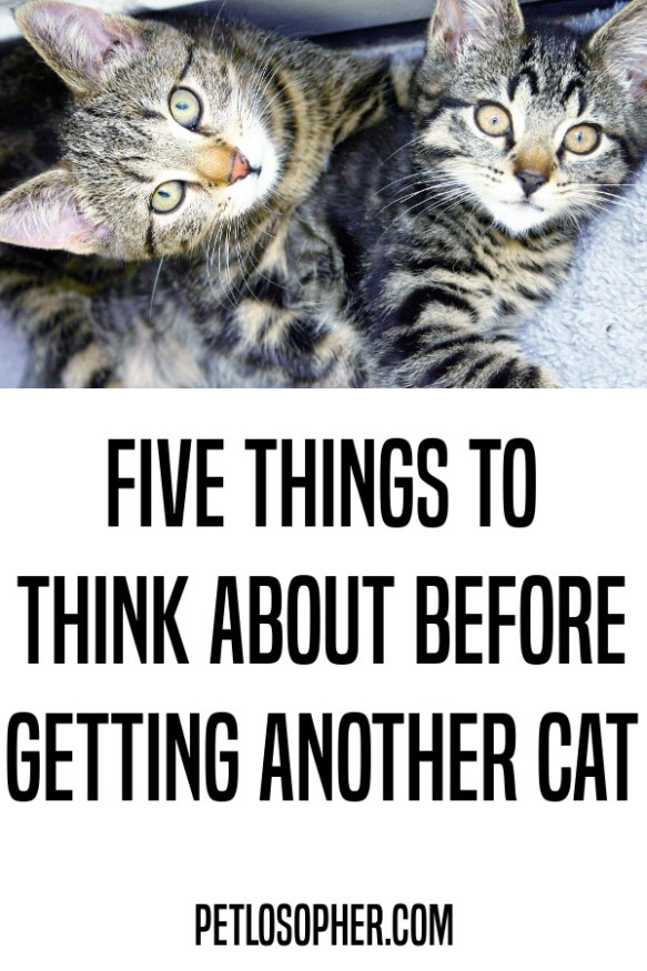 Five things to think about before getting another cat