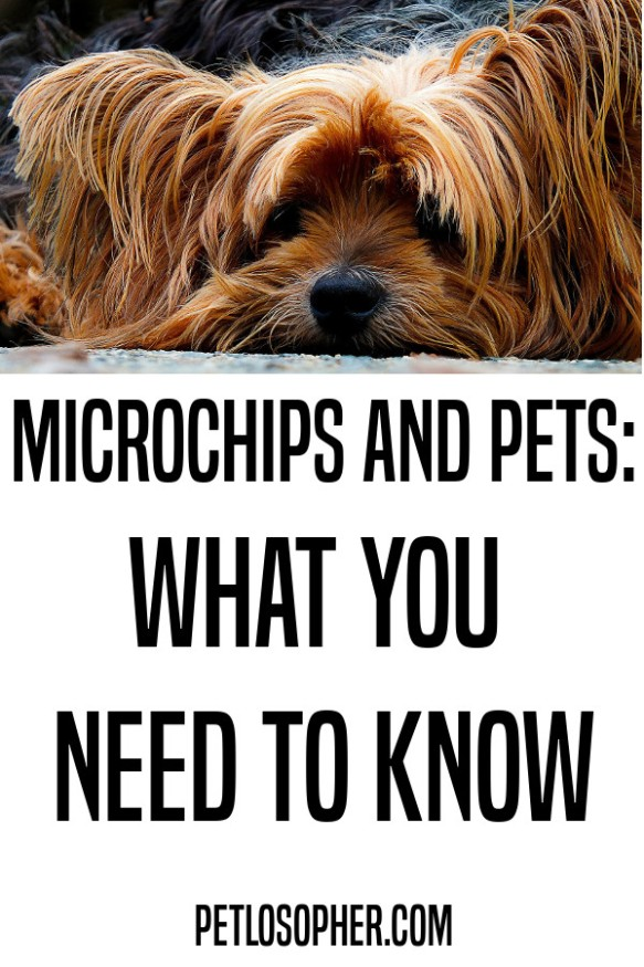 microchips and pets what you need to know
