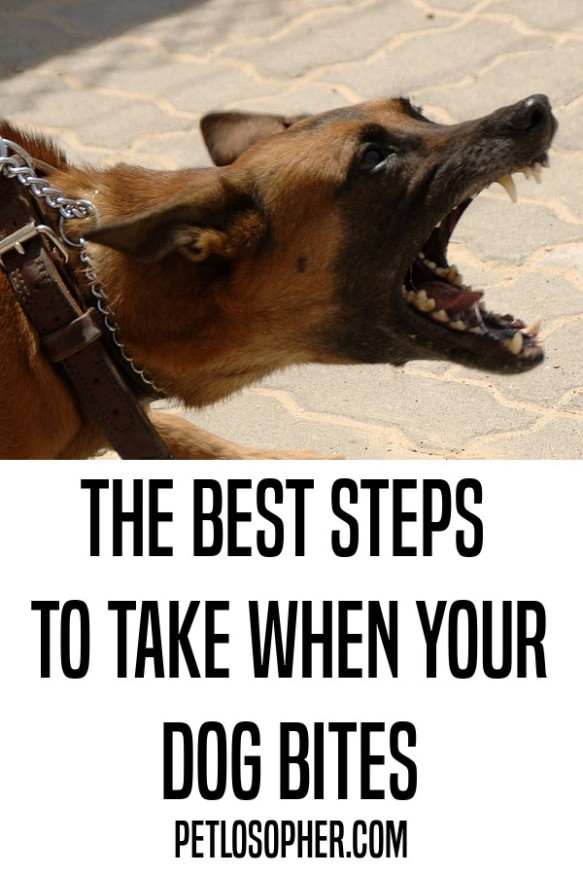 the best steps to take when your dog bites someone