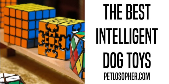 the best intelligent dog toys
