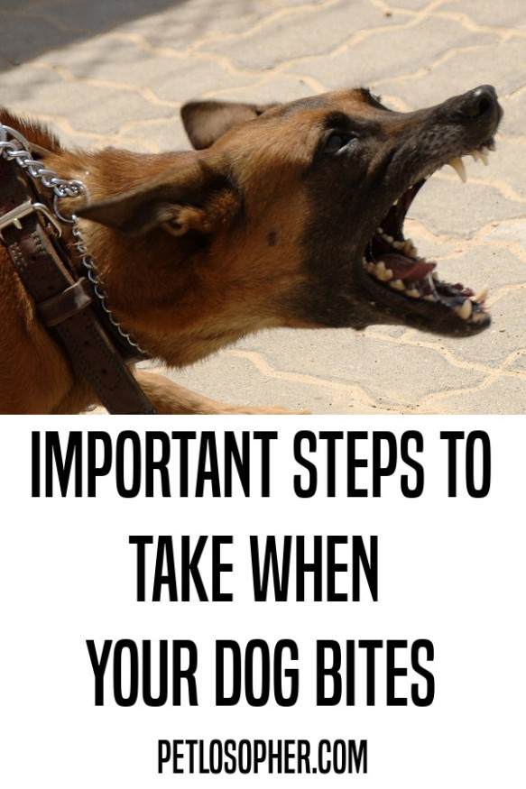 important steps to take when your dog bites someone