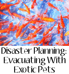 disaster planning - evacuating with exotic pets