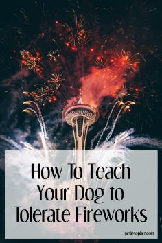 How to teach your dog to tolerate fireworks