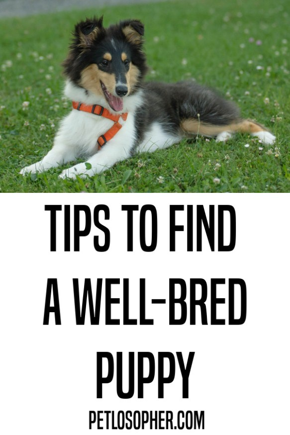 tips to find a well-bred puppy