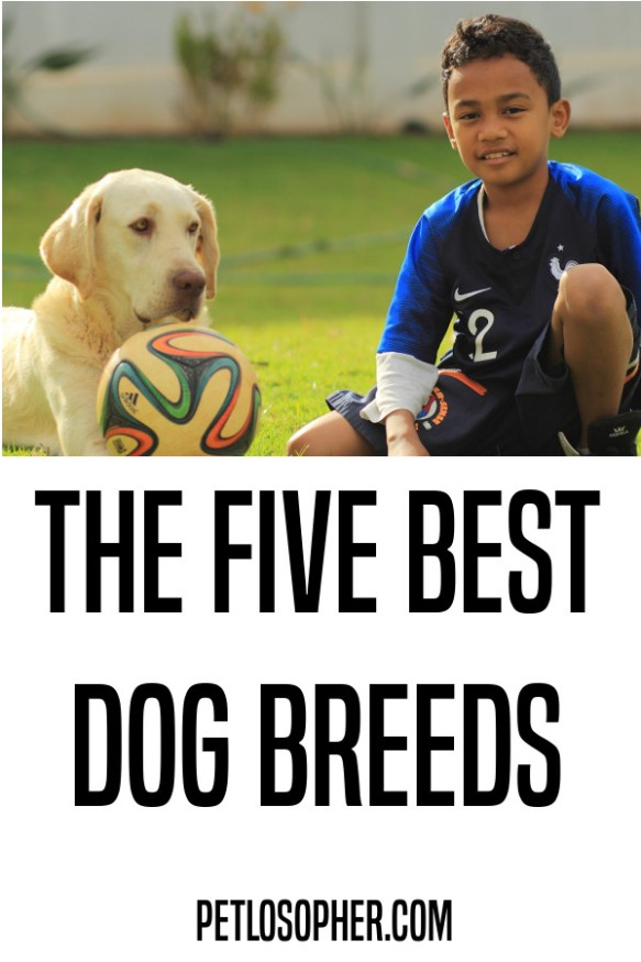 The five best dog breeds