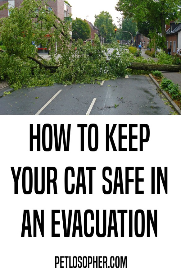 how to keep your cat safe in an evacuation