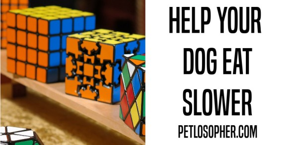 help your dog eat slower