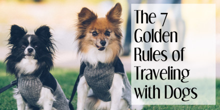 The 7 Golden Rules of Traveling with Dogs