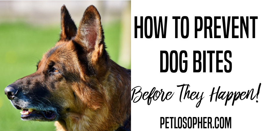 How to Prevent Dog Bites Before They Happen