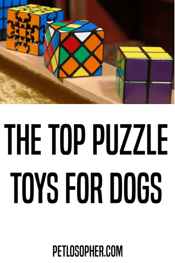 the top puzzle toys for dogs