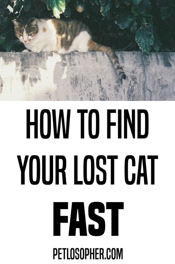 how to find your lost cat fast
