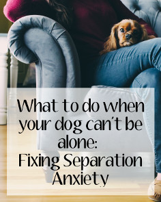 what to do when your dog can't be alone