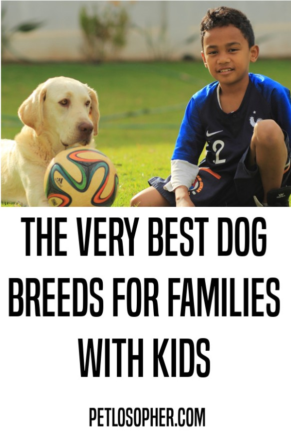 The very best dog breeds for kids with families