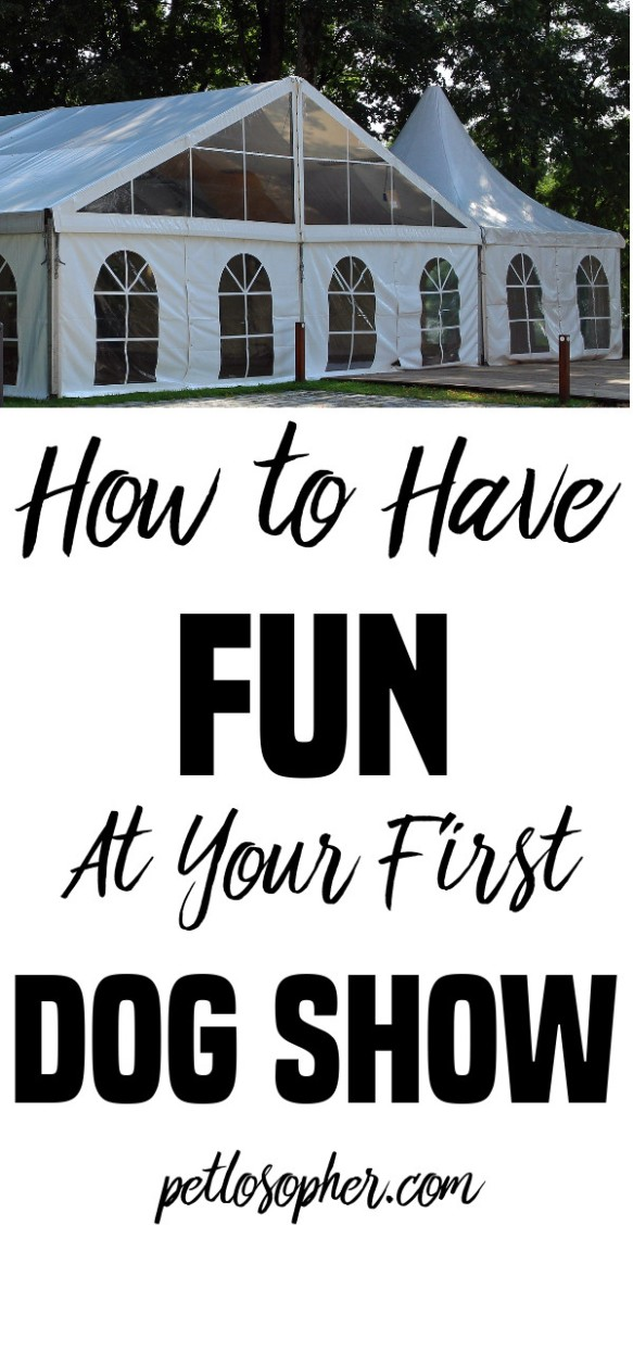 How To Have Fun At Your First Dog Show | Novice Guide to Dog Shows | Dog Show Etiquette | New Puppy | Finding Breeder