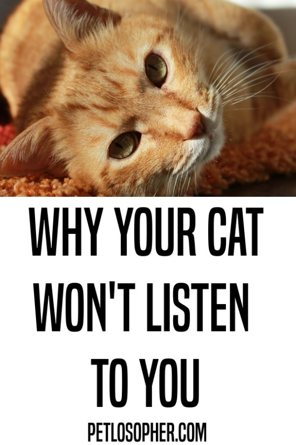 how to train your cat to do anything pin