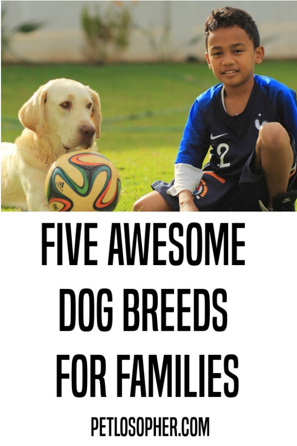 Five awesome dog breeds for families