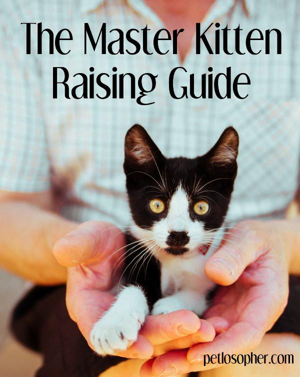 The Master Kitten Raising Guide | Kitten Raising | Kitten Raising Tips | Kitten Training | Kitten Training Tips | Cat Training